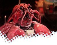 Video: The Singing Lobster