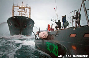 Clash between whaling ship and opponent