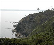 The cliffs in Torquay where fossils can be found