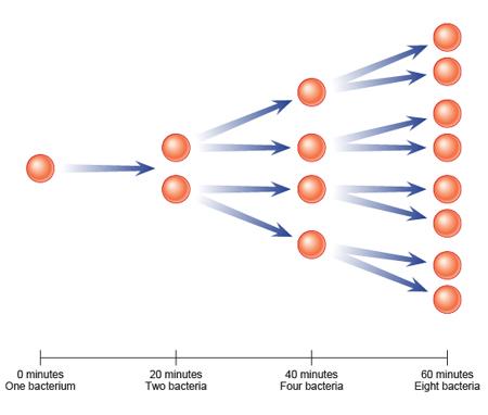 Bbc Gcse Bitesize Population Growth Of Microorganisms