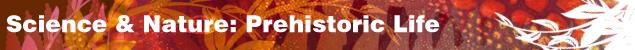 Logo for Evolution Website:  Mother of Man 3.2 million years ago