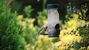 Bird eating from bird feeder