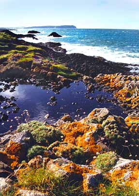 Rockpools by the sea - Co. Antrim