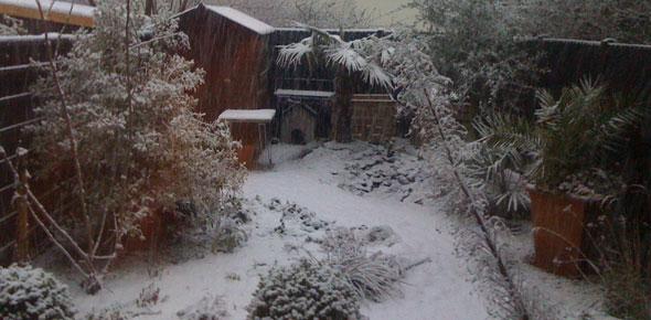 Image result for winter garden uk