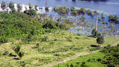Illegally deforested land in the Brazilian state of Para.