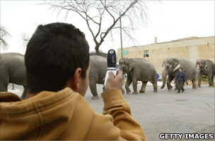 Boy takes a picture of elephants with his camera phone in Chicago