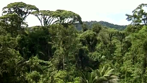the importance of tropical rainforests around the world The world's biggest river flows through the world's biggest rainforest – both   why its important about the amazon wildlife challenges affecting the  south  america's amazon contains nearly a third of all the tropical rainforests left on  earth.