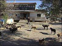 Greek house with dogs