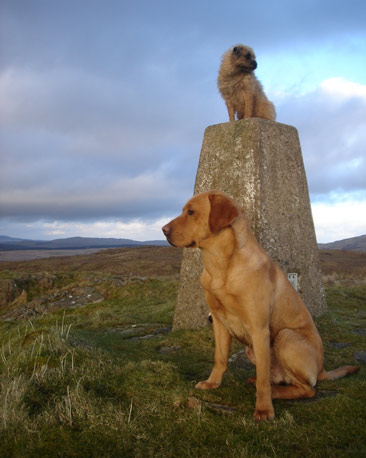 Two dogs beside trig point