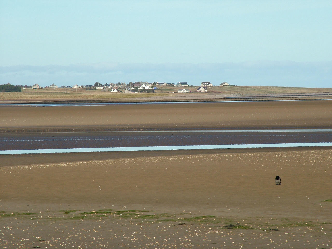 Cockle Ebb, looking towards Tong