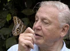 David Attenborough with a morpho butterfly © BBC/Mark Carwardine