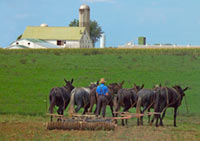 BBC - Religions - Christianity: The Amish