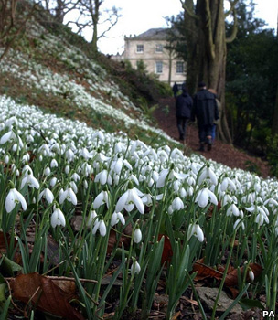 Snowdrops at Newark House (Image: PA)