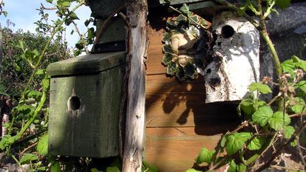 Diy house martin nest box