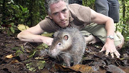 jungle rat