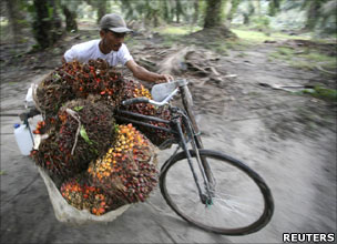 Man with bike laden with palm oil fruits