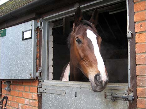 Kauto Star at home: at Manor House Farm, Ditcheat.