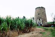 Photograph showing a sugar cane field and windmill in Barbados