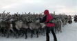 nenets's video screenshot thumbnail