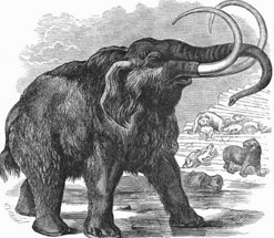 Line Drawing of a Woolly Mammoth