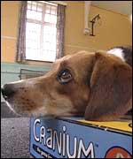 A dog resting his head on a box