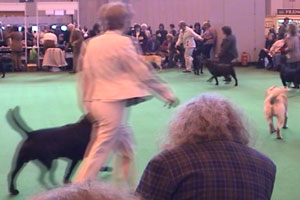 Majorie's highlight of the year is the annual Crufts event