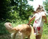 Golden Retriever walking with young girl