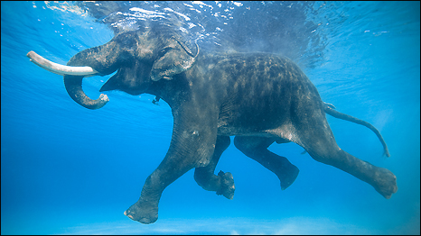 how was hannibal able to get elephants over the