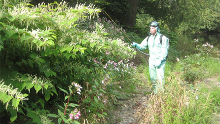 Spraying invasive plant species. Image by Rivers Trusts of North East Wales