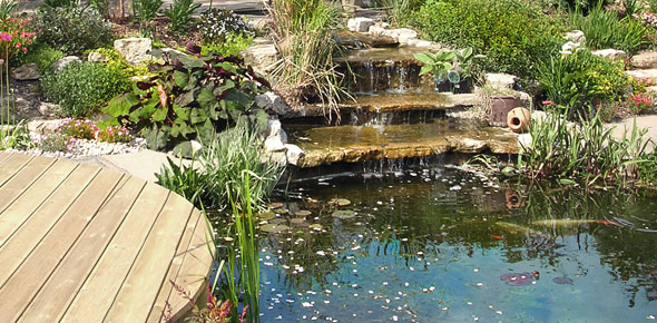 Bbc gardening blog natural swimming ponds for Natural garden pond