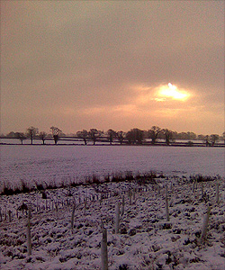 A snowy day at the site of the Battle of Bosworth. Looking towards Fen Hole.