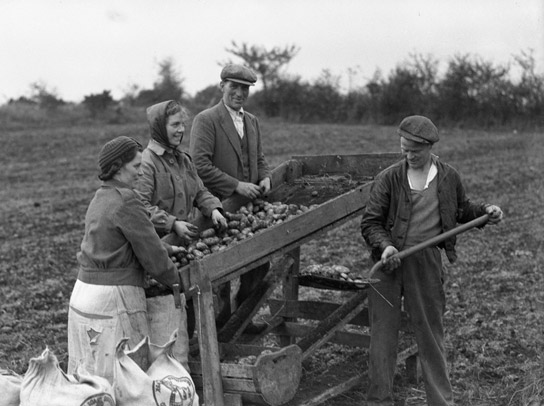 a farmer and his family bagging up potatoes in a field.