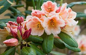 Garden Design Garden Design with BBC Gardening Gardening Guides