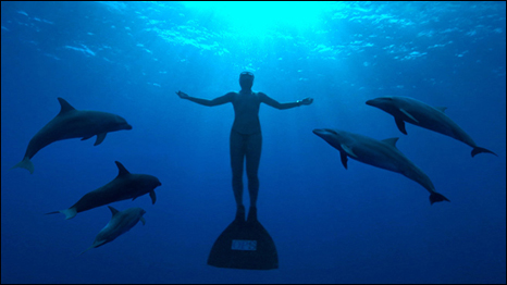 Free diver with dolphins