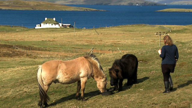 BBC - Scotland - Folk Art meets Fair Isle