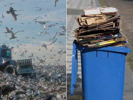 First half: Landfill with hundreds of birds swirling around sky. Second half: Blue recycling bin filled with cardboard.