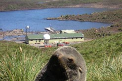 The Bird Island Research Station (plus seal) (credit: British Antarctic Survey)