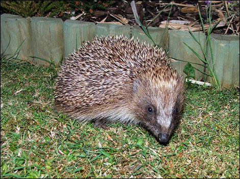 Bbc error 404 not found for Garden animals