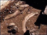 Excavação de restos de mamute