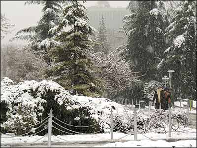 ����� ������ 20060113111349mehrdad-arshad-rad05.jpg