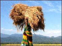 खेती-किसानी