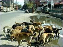 Скопјани бараат хуманост за кучињата 20080414083233dogs-in-city-203